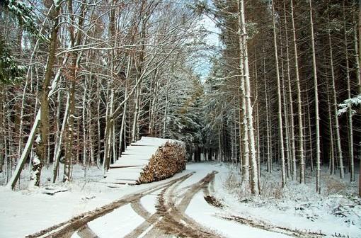 Schnee im Winterwald